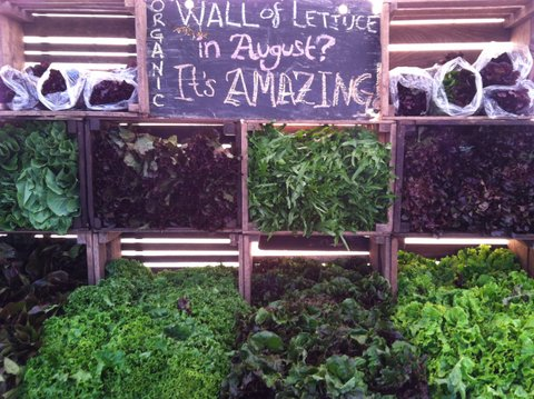 Henry's Amazing Wall of Lettuce